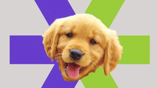 e-trade puppy