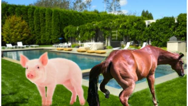 WilburFalcone.Horse