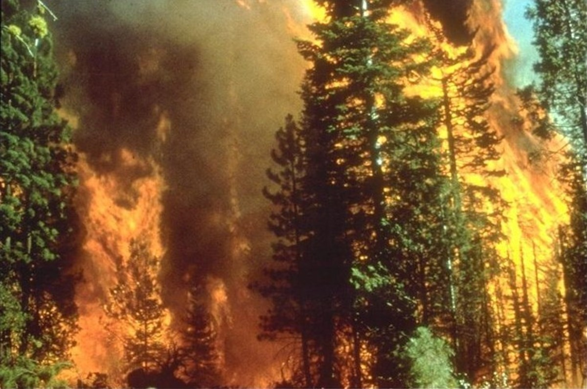 Seth Klarman To Roll Around In PG&E Winnings While Paul Singer, Others Fight Over Charred Scraps