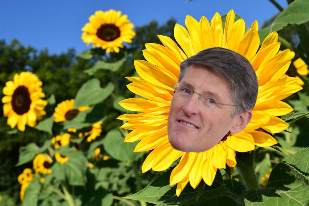 sunflower-corbat
