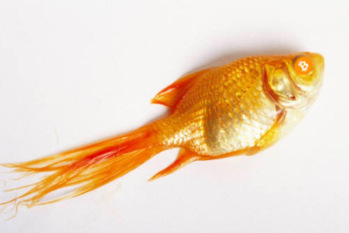 GoldfishBitcoin